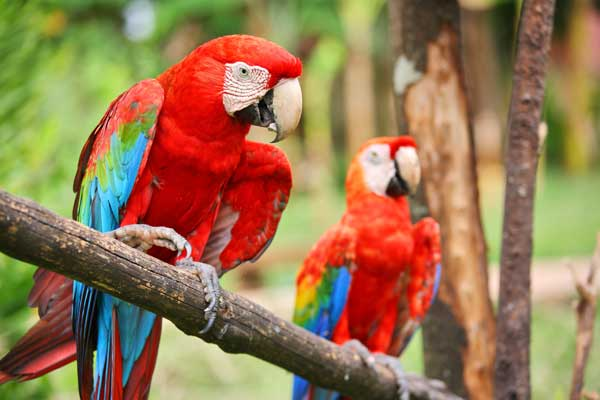 retirement services international concierge services retiring overseas panama macaws portugal sri lanka ecuador