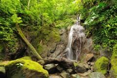 Colombian Darien Jungle